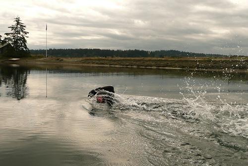 Swimming in Fletcher Bay, Bainbridge Island