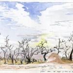 dryforestsunset