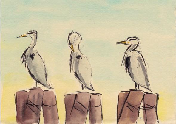 heron_sketch