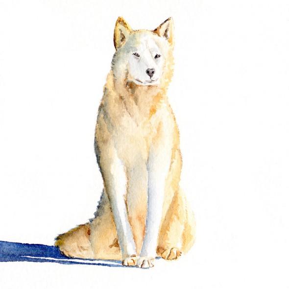 sittingdog1