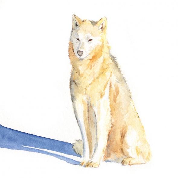 sittingdog2