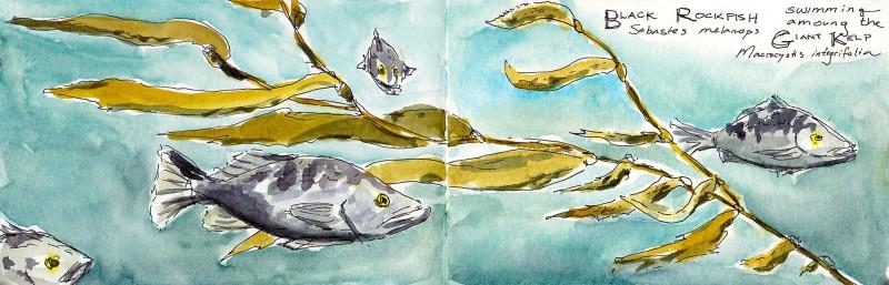 "Ucluelet Aquarium, 3.5"" x 11"" Moleskine sketchbook ink and watercolor"