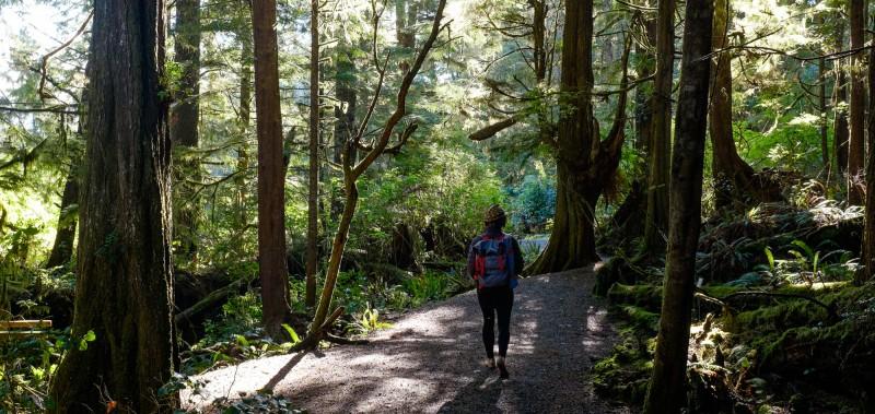 Coastal forest, photo by Darin Reid