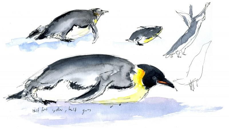 Emperor Penguin gestures, 2006