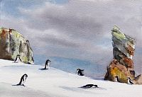 Chinstrap Penguins II