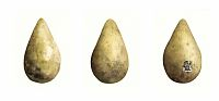 Hudsonian Godwit Eggs