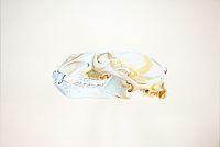 Polar Bear Skull