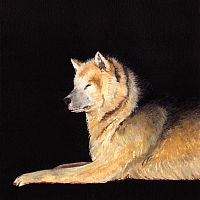 Lying Sled Dog