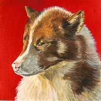 Sled Dog on Red