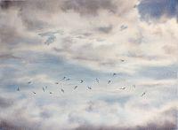 Tern Migration